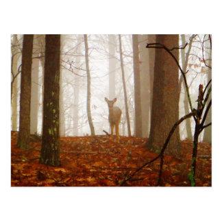 Hjort i misten vykort