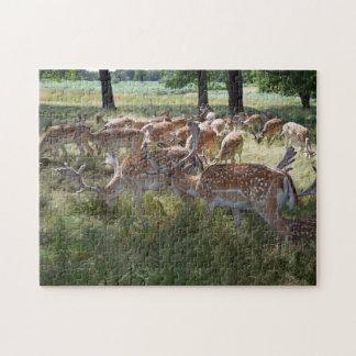 Hjort i parkerafotopussel jigsaw puzzle