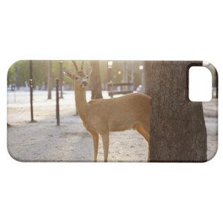 Hjort i staden iPhone 5 Case-Mate skal