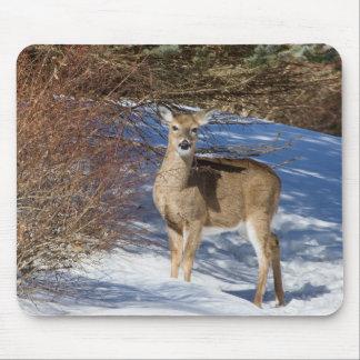 Hjort med snö och borstar musmatta