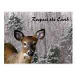 Hjort och frostiga backar vykort