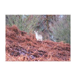 Hjort på en backe canvastryck