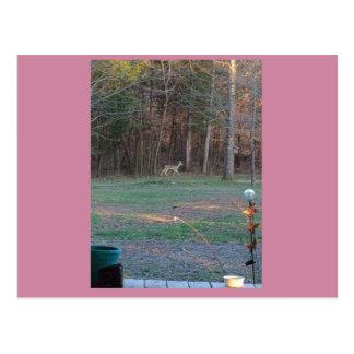 Hjort på en gå vykort