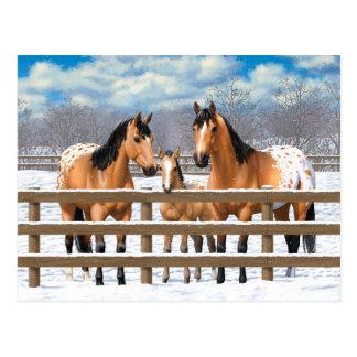 HjortläderAppaloosahästar i snö Vykort
