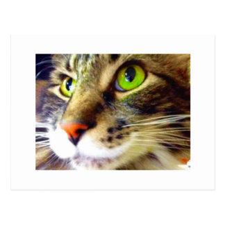 """Hög"""" gullig kattvykort """"för fluffiga något att vykort"""