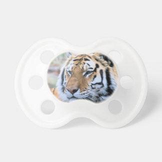 Hög-Res stoisk kunglig Bengal tiger Napp