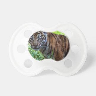 Hög-Res Sumatran tigerunge Napp