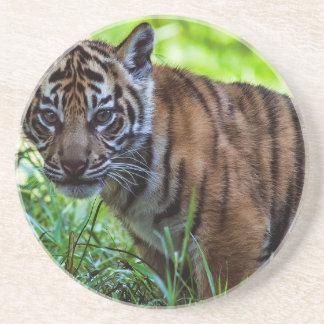 Hög-Res Sumatran tigerunge Underlägg Sandsten