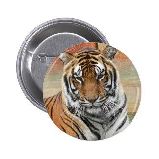 Hög-Res Tigres i begrundande Standard Knapp Rund 5.7 Cm