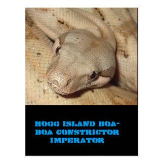 Hogg öboa vykort