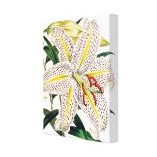 Högvärdig botanisk kanfas för vittigerlilja canvastryck