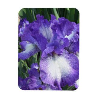 Högvärdig magnet för Lila-Vit Iris