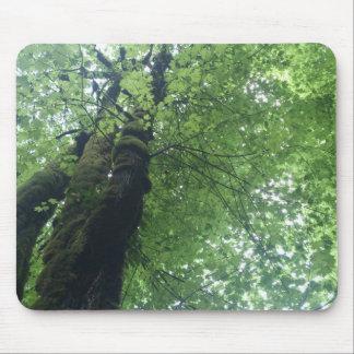 Högväxt träd musmatta