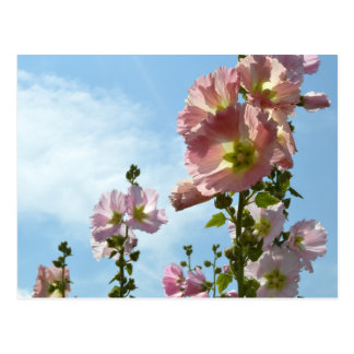 Hollyhocks: Japan Vykort