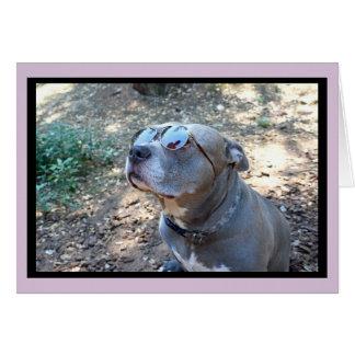 Hollywood Pitbull valentin kort för dag Hälsningskort