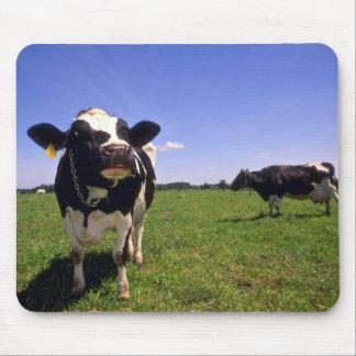 Holstein mejerinötkreatur musmatta