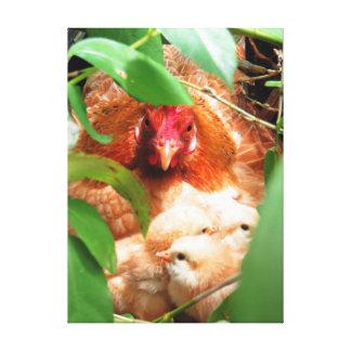 Höna och chickar canvastryck