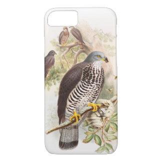 Honung-Vråk John Gould fåglar av Storbritannien