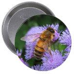 Honungbiet knäppas