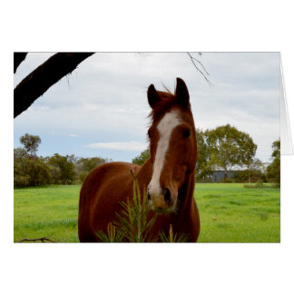 Horse_Smelling_A_Bush _Birthday_Greeting_Card Hälsningskort