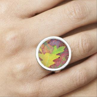 Höst löv i gult, rött, orange och lilor ringar med foto