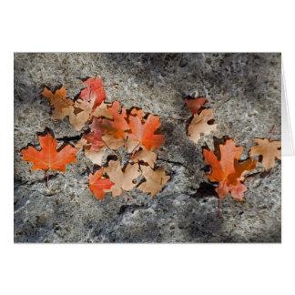 Höst löv på Limestone Hälsningskort