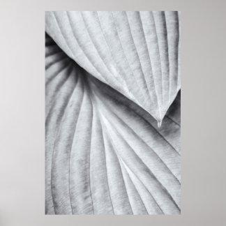 Hosta i svartvitt poster