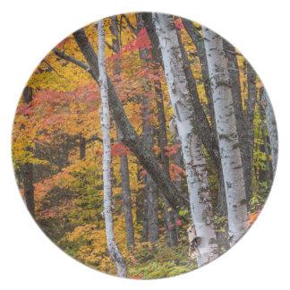 Höstfärg i skogen nära förkopprar hamn tallrik