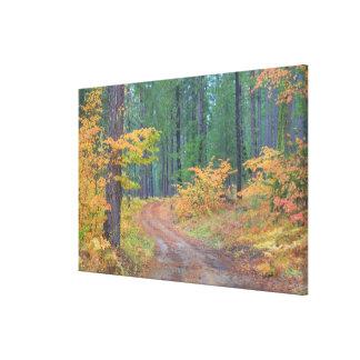 Höstfärger av skogar i kaskaden 2 canvastryck