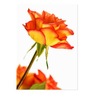 Höstglansen avfyrar den rosa blommavisitkorten set av breda visitkort