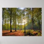 Höstsol i skogen print