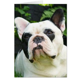 Howgillhounds cards den franska bulldoggen Susan OBS Kort