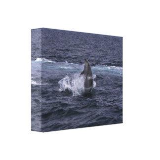 Hula-ring Bottlenosedelfin - kanvastryck