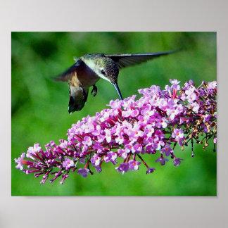 Hummingbird 4 poster