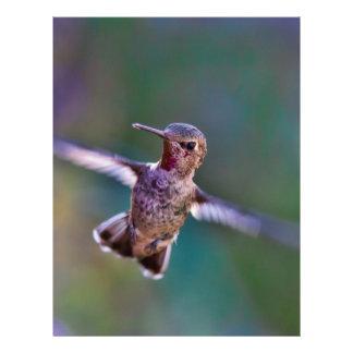 Hummingbird-691 Brevhuvud