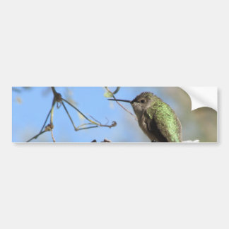 Hummingbird Bildekal