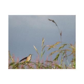 Hummingbird Canvastryck