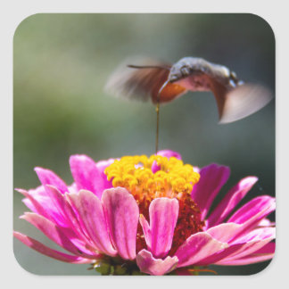 Hummingbird Fyrkantigt Klistermärke