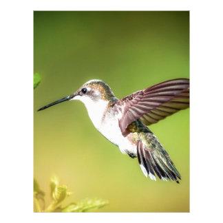 Hummingbird i flyg brevhuvud