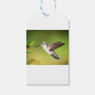 Hummingbird i flyg pack av presentetiketter