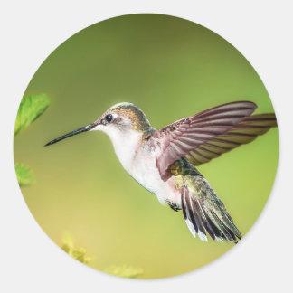 Hummingbird i flyg runt klistermärke