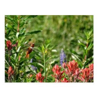 Hummingbird i vildblommor vykort