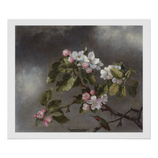 Hummingbird och Apple blommar Martin J. Heade Poster