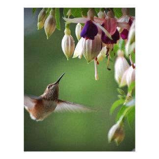 Hummingbird och Fushia växt Brevhuvud