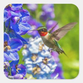 Hummingbird och riddarsporre fyrkantigt klistermärke