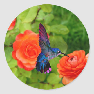 Hummingbird och ro runt klistermärke