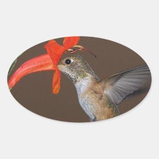 HUMMINGBIRD OVALT KLISTERMÄRKE