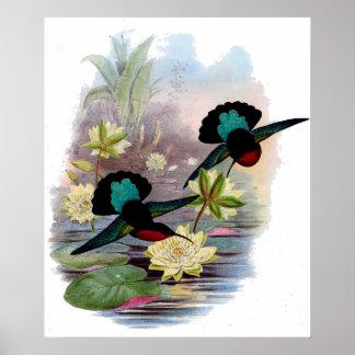 Hummingbirdfröjd Poster