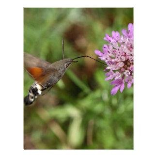 Hummingbirdhök-mal (den Macroglossum Brevhuvud