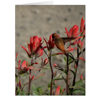 hummingbirdkardinal flw. jumbo kort